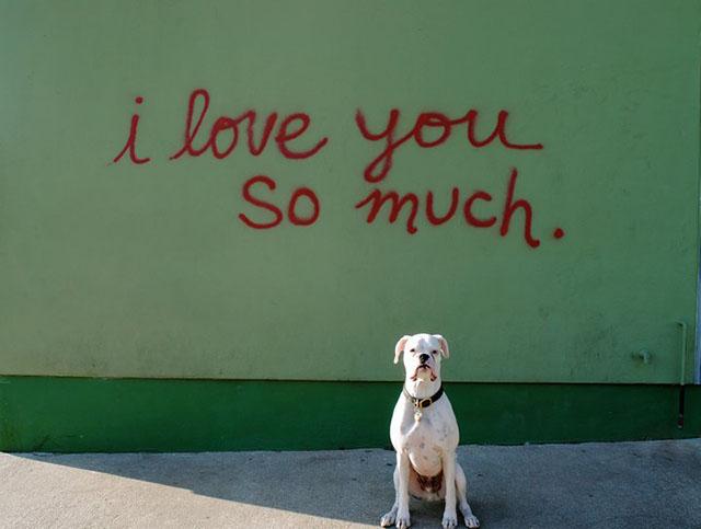Good Dog Adoption Stories