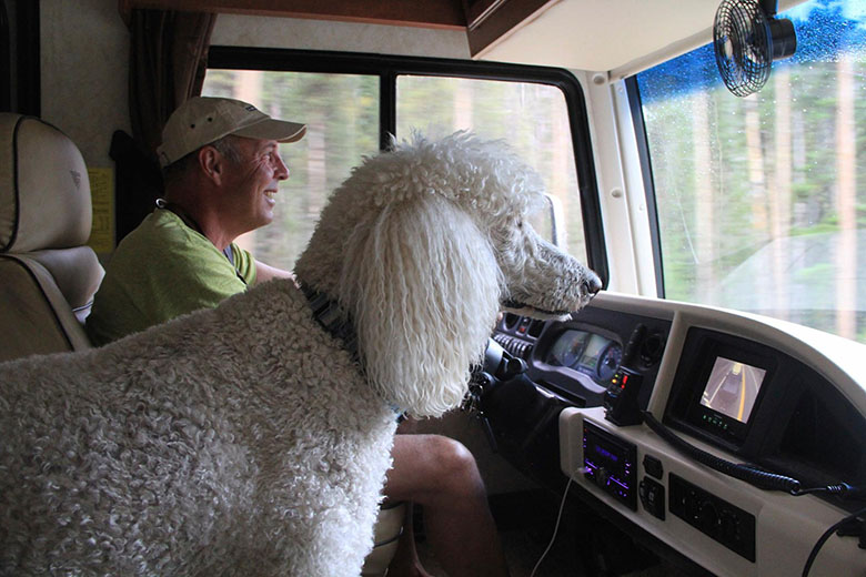 90 year old and her poodle Ringo on road trip 7