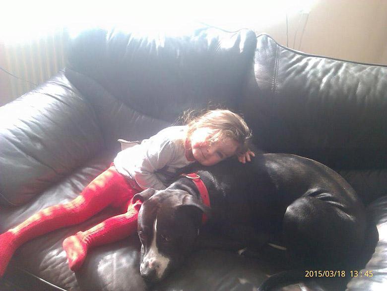 Teddy UK Dog Sentenced to Death 1