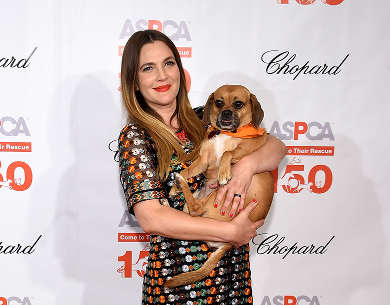"""""""NEW YORK, NY - APRIL 14: Actress Drew Barrymore attends ASPCA 19th Annual Bergh Ball honoring Drew Barrymore, hosted by Nathan Lane wiith music by Mark Ronson at the Plaza Hotel on April 14, 2016 in New York City (Photo by Jamie McCarthy/Getty Images for ASPCA)"""""""