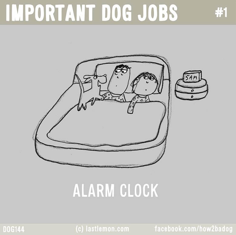 Important Dog Jobs 1