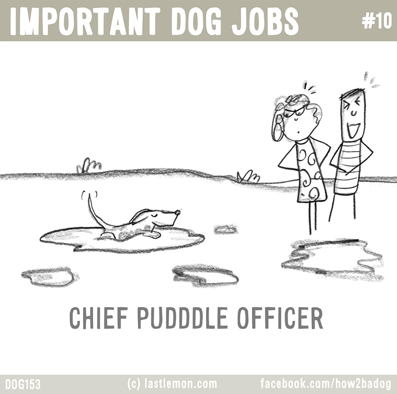 Important Dog Jobs 10