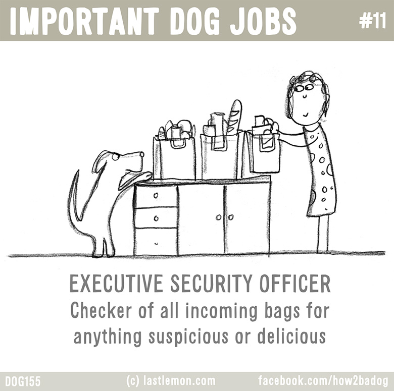 Important Dog Jobs 11