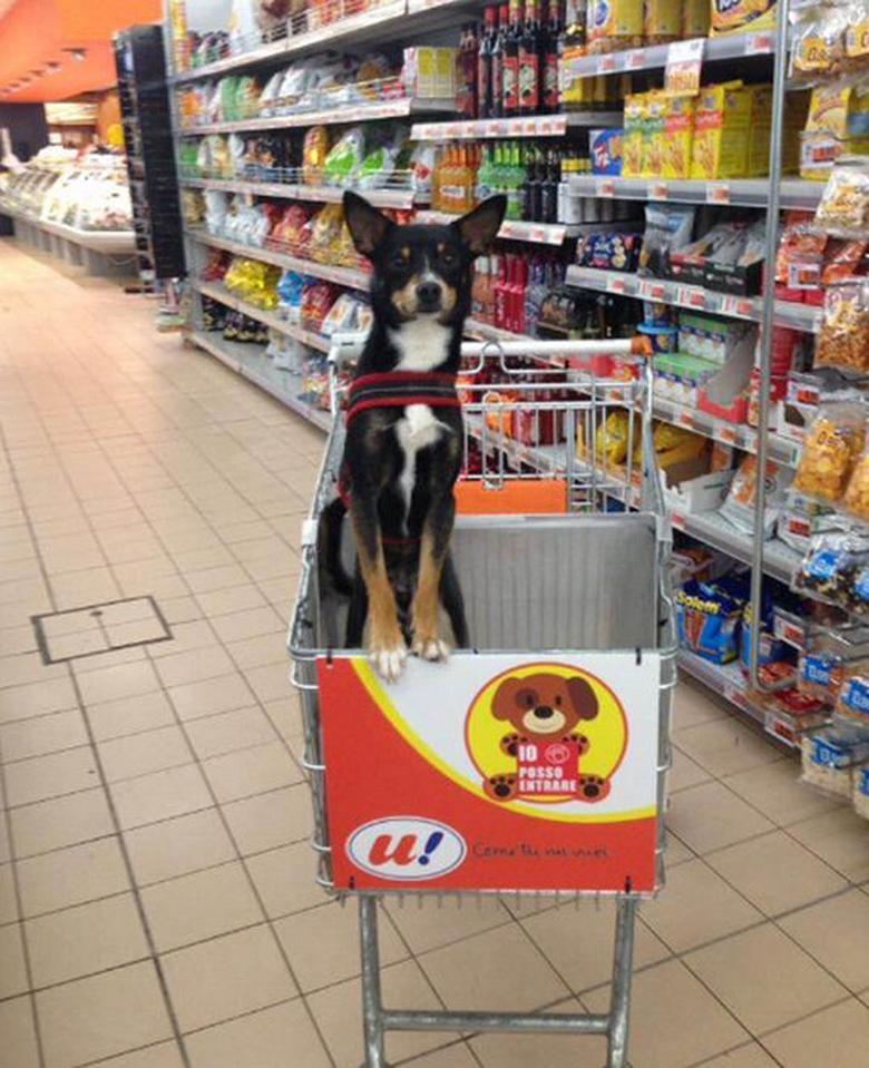 dog in grocery store 2
