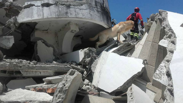 dog saved people from ecuador earthquake 5