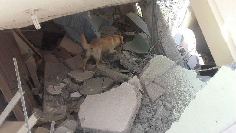 dog saved people from ecuador earthquake 7
