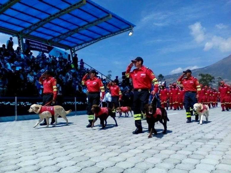dog saved people from ecuador earthquake 8