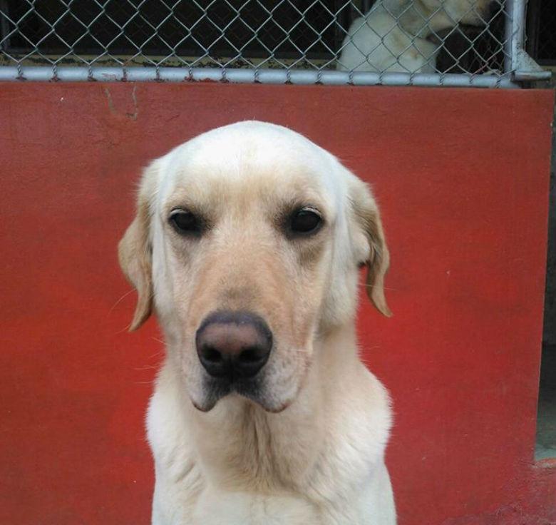 dog saved people from ecuador earthquake