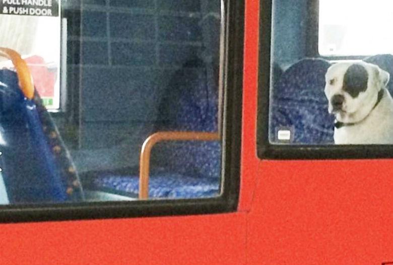 dog left on bus 2