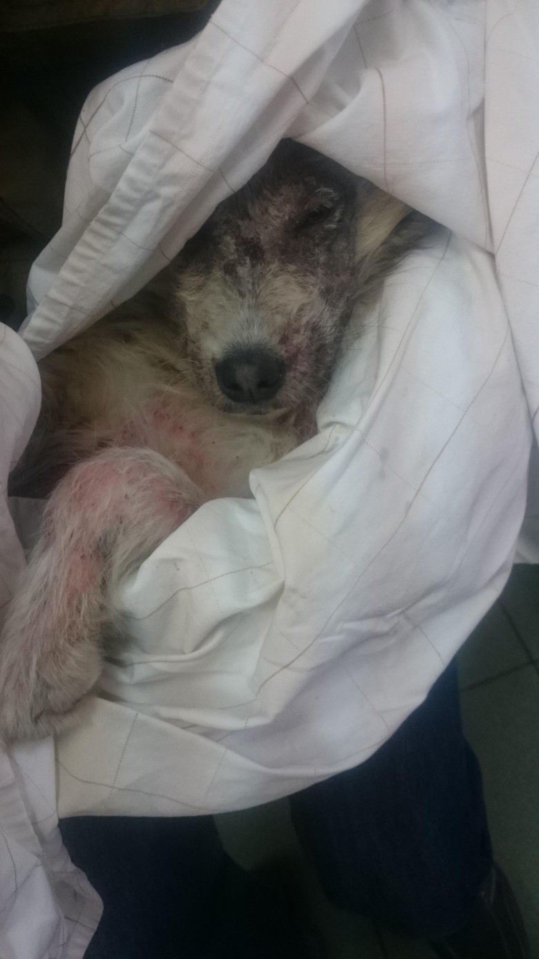 Annie Valkyrie Saves Dog in Bulgaria 2