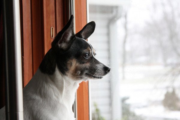 Worried About Leaving Your Dog Home Alone Try This Trick