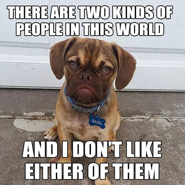 My Name Is Dog Meme