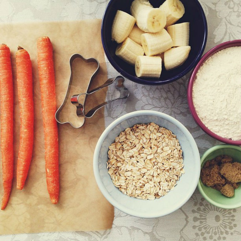 beyond raw food other beneficial diet options for your pup this