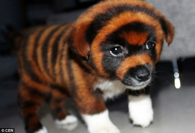 Dog Breed That Looks Like A Tiger