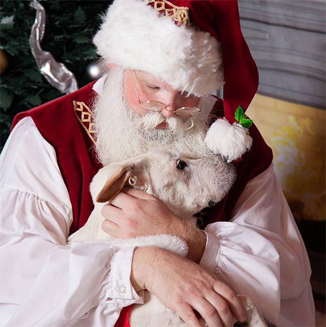Photo Credit: Poh the Dog's Big Adventure