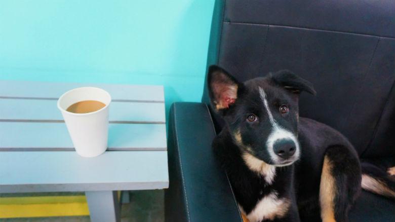 The Dog Cafe