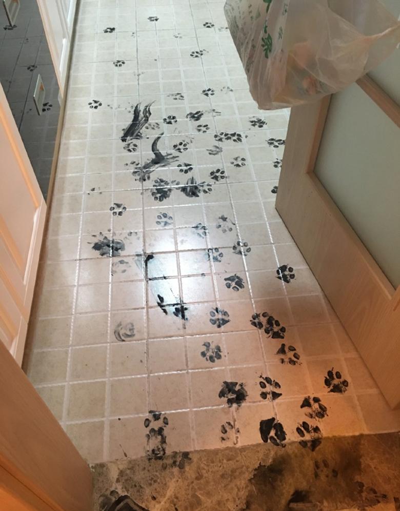 Dog Destroys Home 2