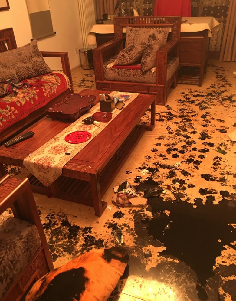 Dog Destroys Home 6