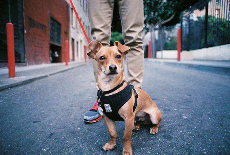 Hesitant to Leave Your Pup With a Dog Walker? Here are 5 ...