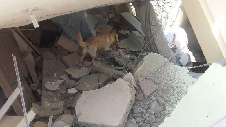 dog saved people from ecuador earthquake 7