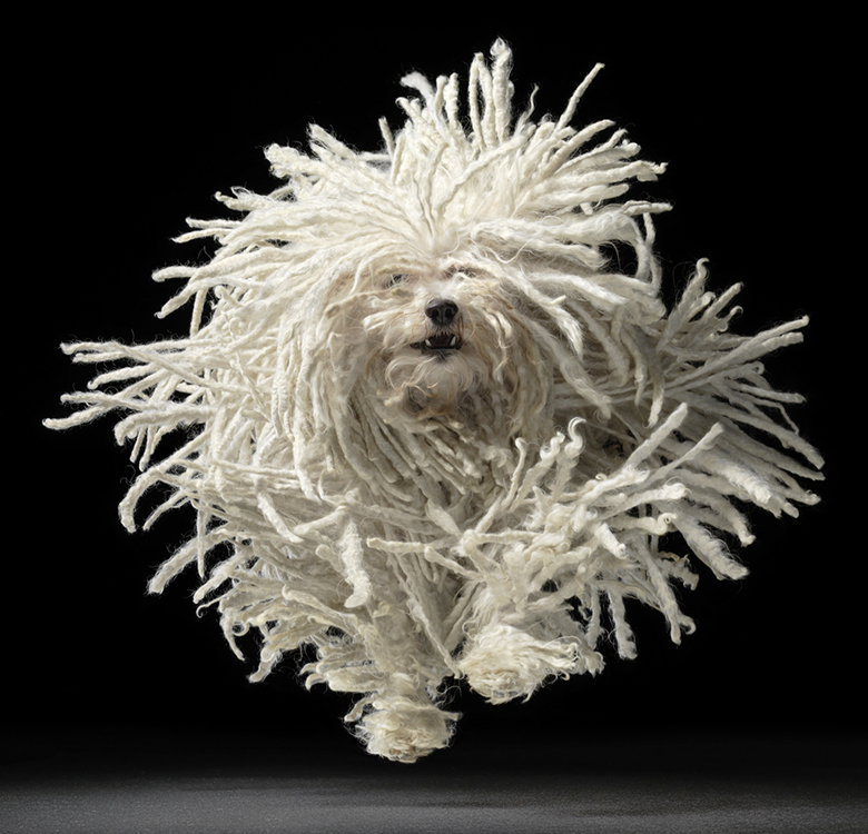Hungarian Puli and Tim Flach