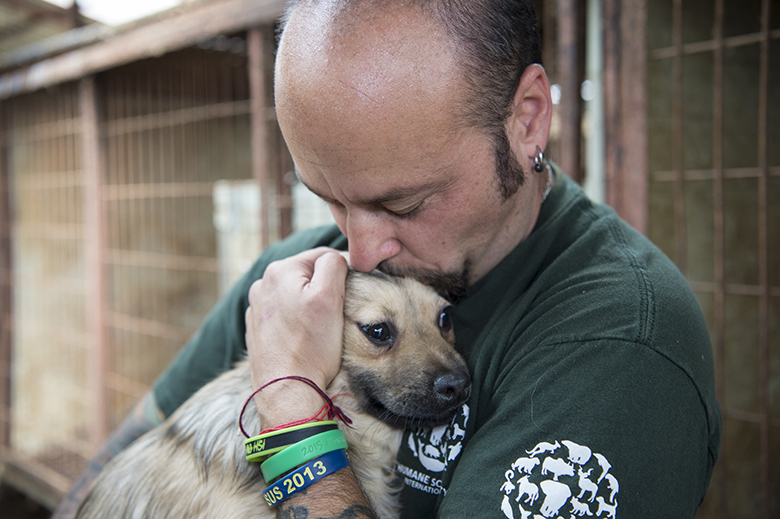 Dogs rescued from South Korea Dog Farm
