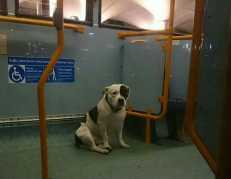 dog left on bus 1