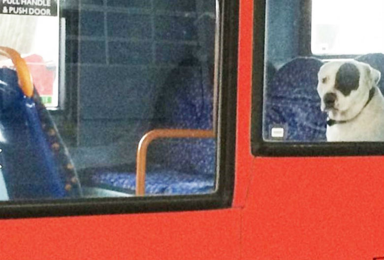 dog left on bus 2