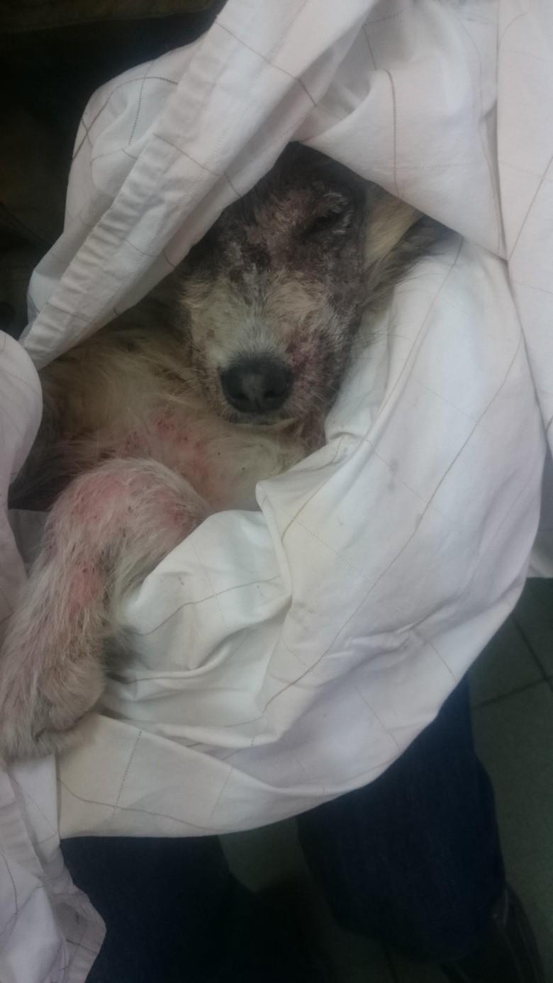 Annie Valkyrie Saves Dog in Bulgaria 2