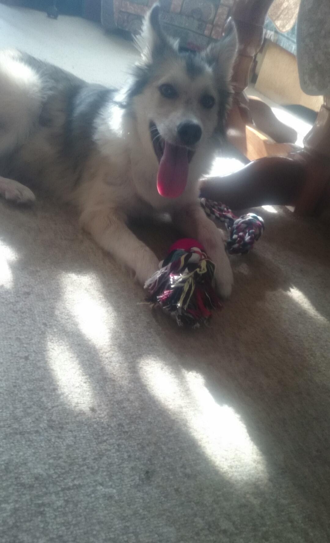 Annie Valkyrie Saves Dog in Bulgaria 6