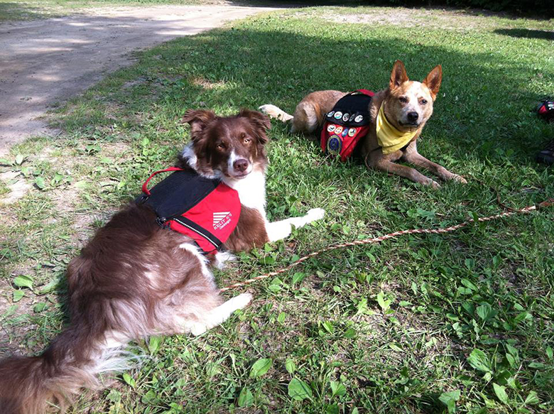 Dog Scouts 3