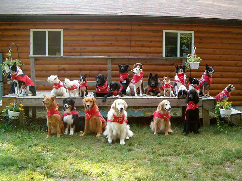 Dog Scouts 5