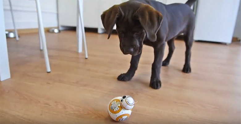 Epic Battle Between A Puppy And Star Wars Bb 8 Robot This Dog S
