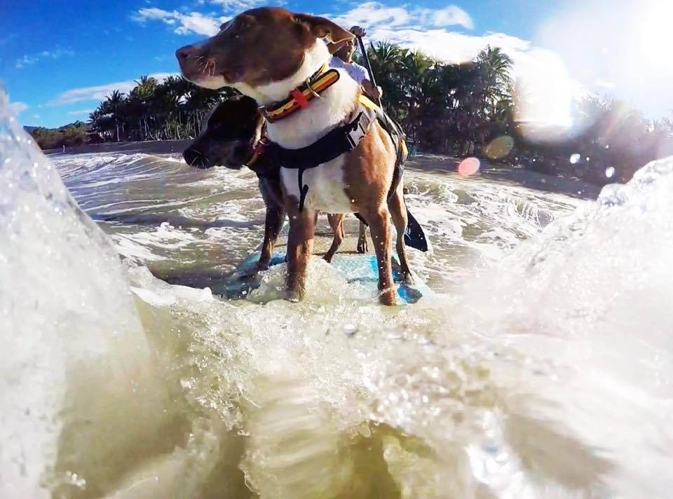 Chris Surfer Dog 2 FB chris