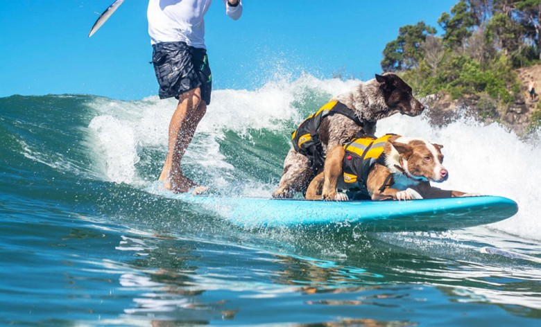 Chris Surfer Dog 2