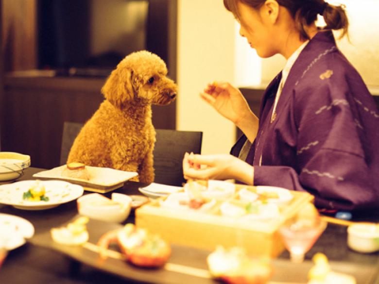 Dog Spa Japan