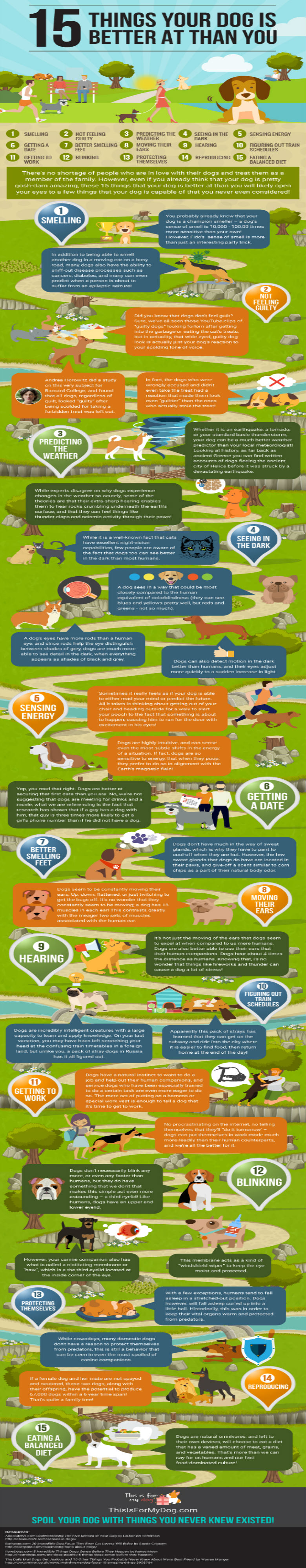 15 things your dog is better at than you