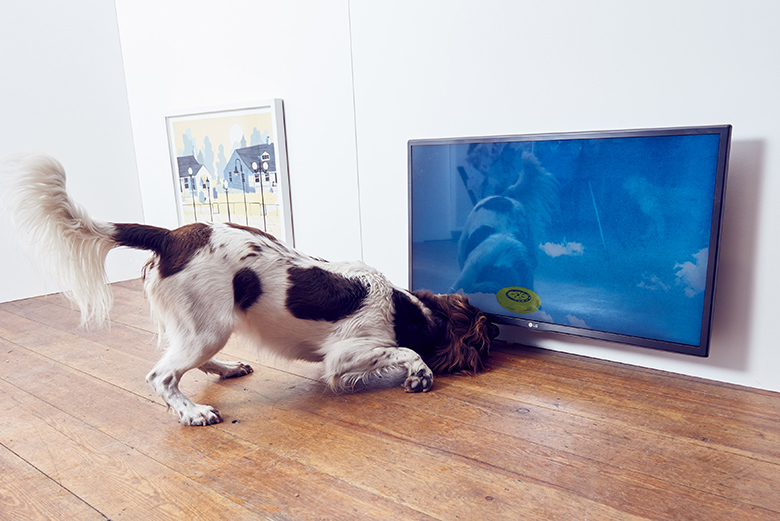 Contemporary art exhibition just for dogs