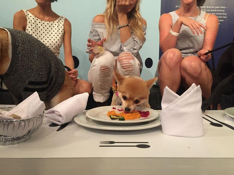Casper Dog Influencer Steak Dinner