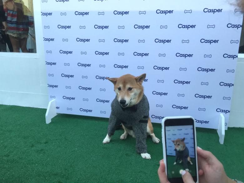 Menswear Dog striking a pose at the Casper Dog Influencer Steak Dinner