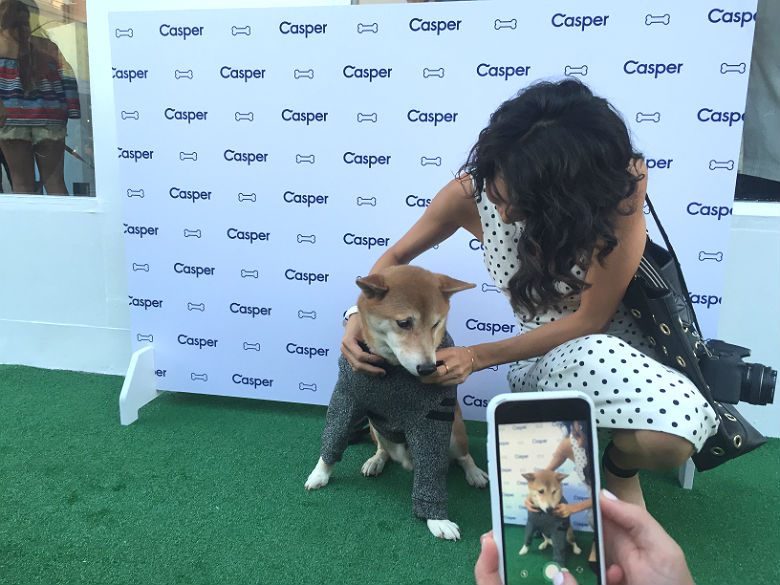 casper bed for dogs. while the trend of people transitioning from dog owner to parent continues, nothing epitomizes this movement more than last night\u0027s casper event where bed for dogs 0
