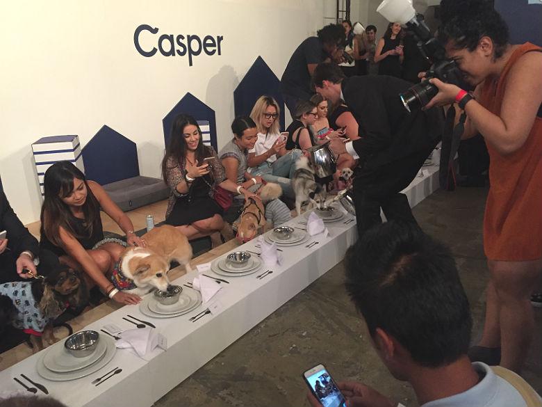 Casper and dogs at dinner