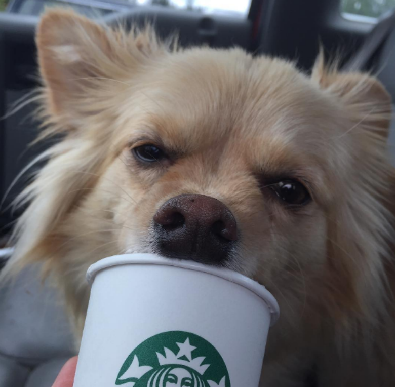 shelter snaps dogs enjoying puppuccinos to help them find their