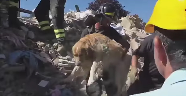 Dog Rescued from Italian Earthquake 1