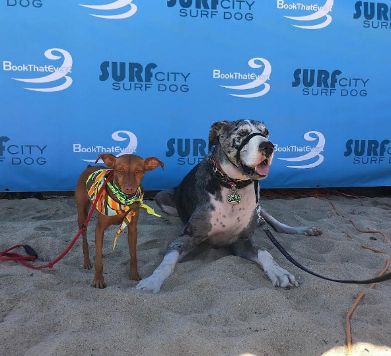 surfdog_IG_Rusty