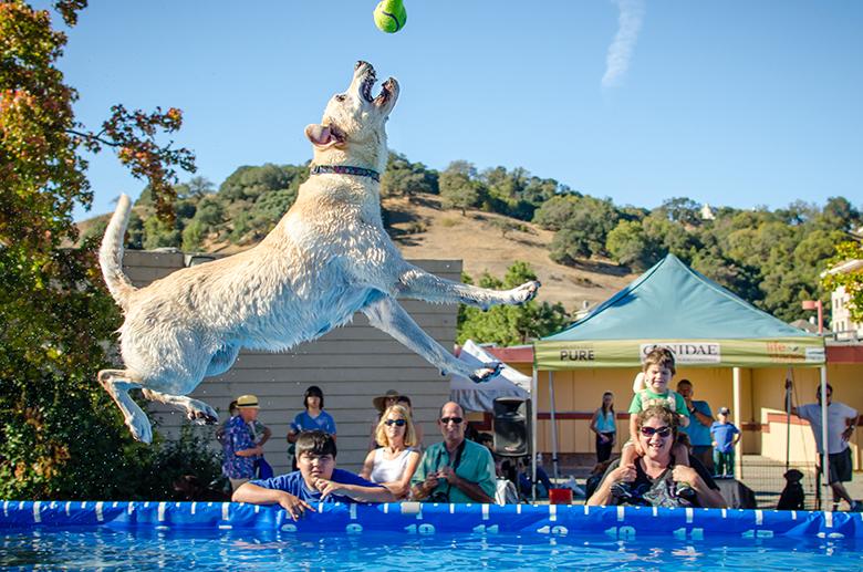 Bay Area Pet Fair 1