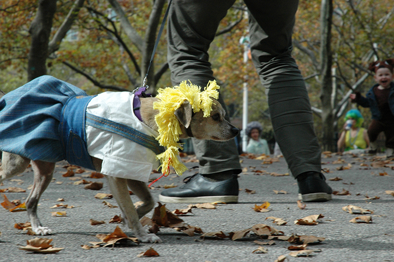 Fort Greene Dog Contest 2