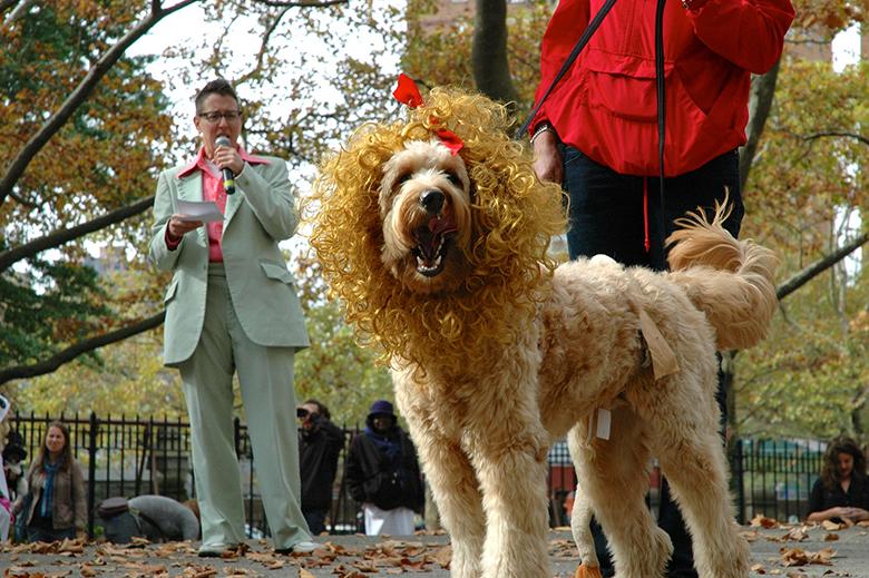 Fort Greene Dog Contest