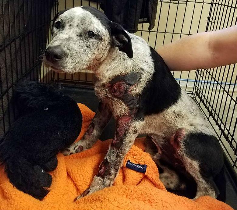 Image via Houston K911 Rescue
