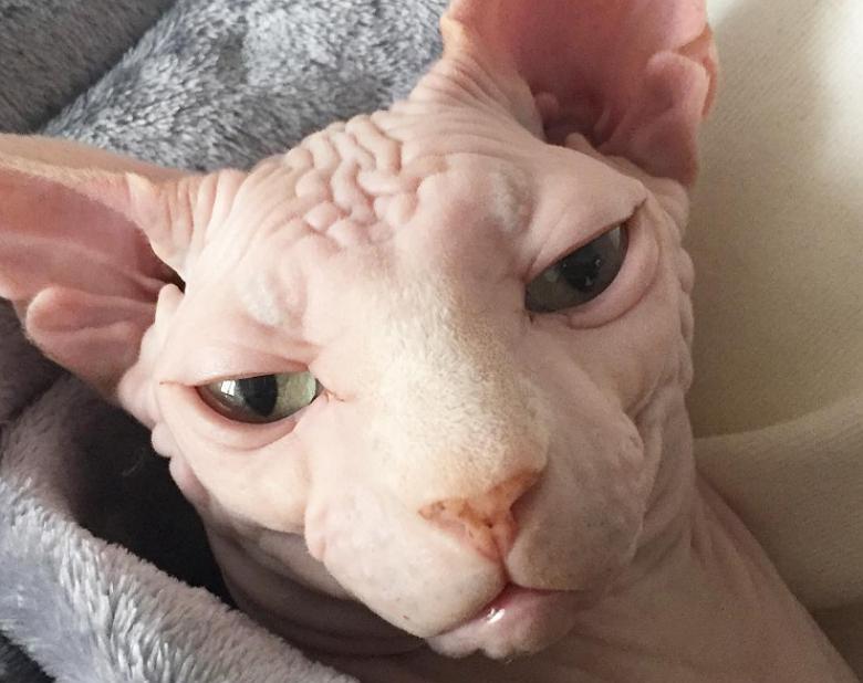 Botox and Lulu 14